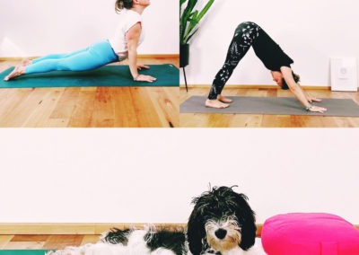 Yogahund am Welthundetag
