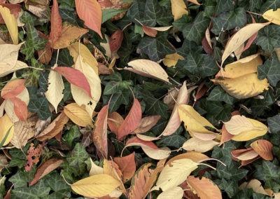 Herbstmeditation