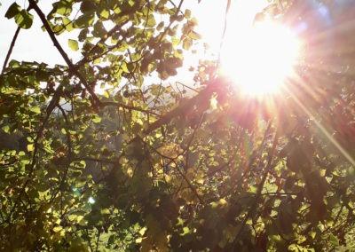 Ayurveda Tipps: Richtig Essen im Herbst